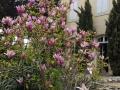 Magnolia Terrace - web format
